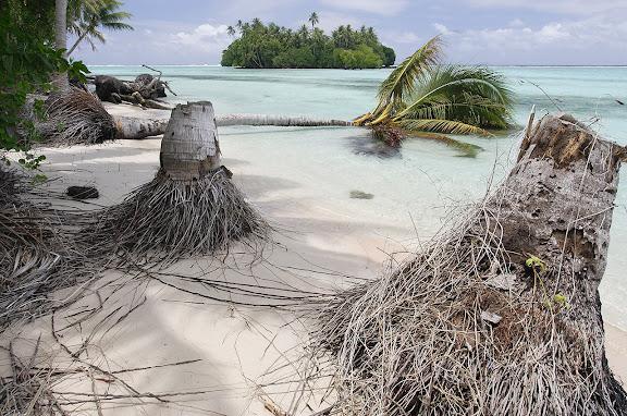 - Bei Flut steigt der Pazifik bis an den Rand des Dschungels. Bei Ebbe liegen Palmen umgestuerzt am Strand. Die Gaerten sind bereits im Meer versunken. Erste Klimafluechtlinge: Das gesamte Carteret Atoll wird aufgrund der Erwaermung des Meeres als erste Inselgruppe versinken. Alle sechs Inseln werden bis 2015 komplett vom Pazifik verschlungen sein. Hauptgrund: Das Abschmelzen der Gletscher und Eisberge. Die Carteret Inseln waren traumhaft schoene Refugien. Weisse Sandstraende umsaeumten einst die Kuesten des Atolls. Oberhalb der Straende reckten sich majestetische Palmen gen Himmel und spiegelten sich bei ruhiger See im tuerkisblauen Wasser des Pazifik.  Die Palmen liegen heute umgestuerzt in einem Meer aus Schlamm. Die Straende sind bereits versunken. Ende 2008 soll die Umsiedlung beginnen. Die Inselbewohner kaempfen um ihre Inseln.