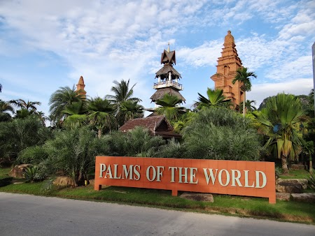 29. palmierii lumii.JPG