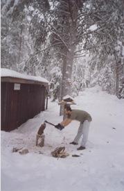 así se corta leña en Laponia. febrero de 2002