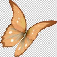 butterfly26.jpg