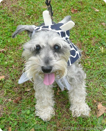 dog-cow-costume