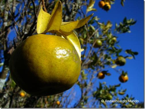 Bergamota pronta para comer Ecoparque Sperry Gramado