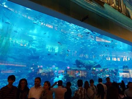 03. Acvariu - Dubai Mall.JPG
