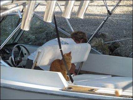 5 toed cat in boat