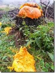 pumpkin shoot 17