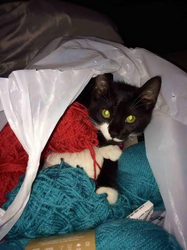 Os gatos não são muito bons em esconde-esconde 18