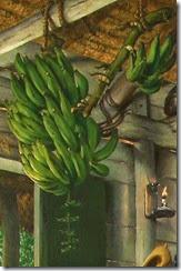 platanos-verdes