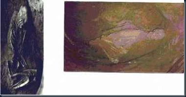 fóssil-de-gigante
