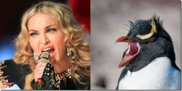 pop-stars-birds-16