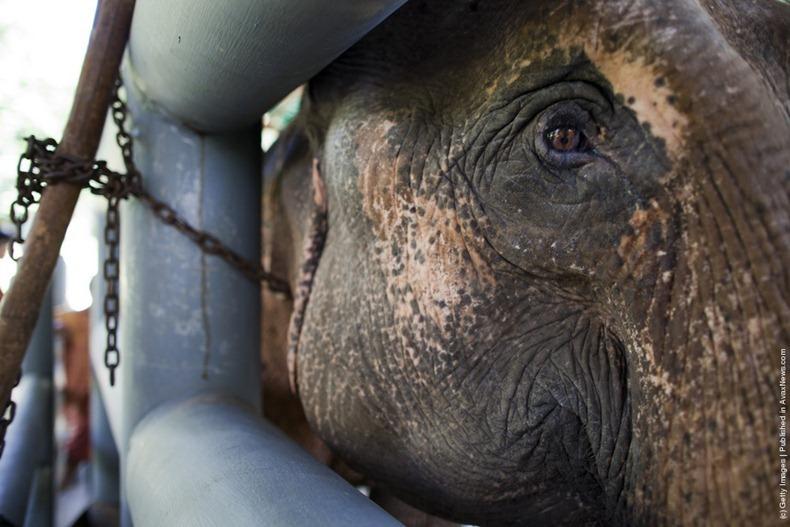 elephant-hospital-7