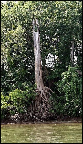 TreeRoot