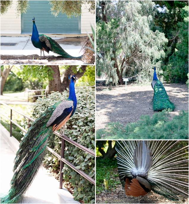 Arboretum collage2