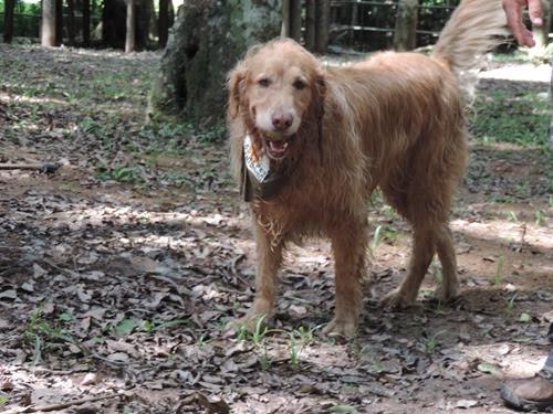 Cães em foco 1 (99)