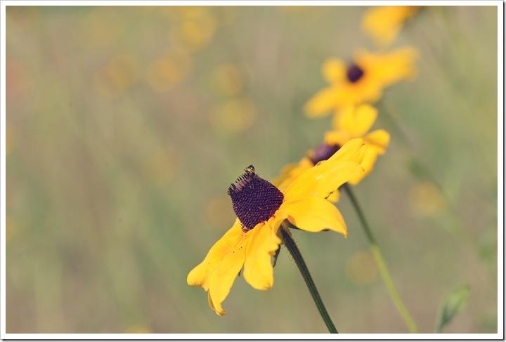bees-flwrs-22-srgb
