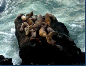 Sea lions (6)