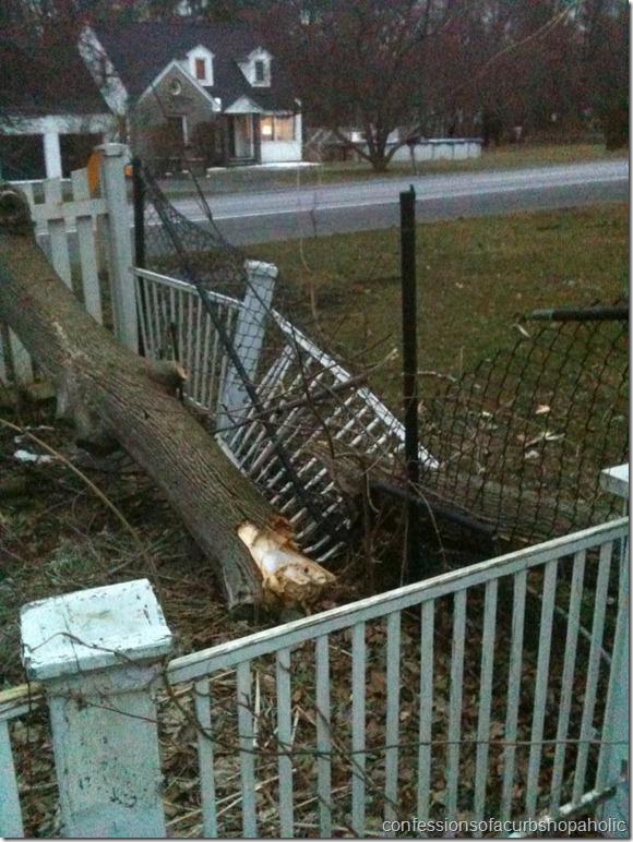 tree on fence