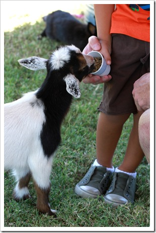 petting zoo IMG_9494