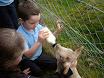 Lambs in school 2011 001.jpg