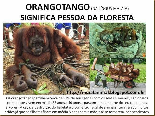 orangotango1