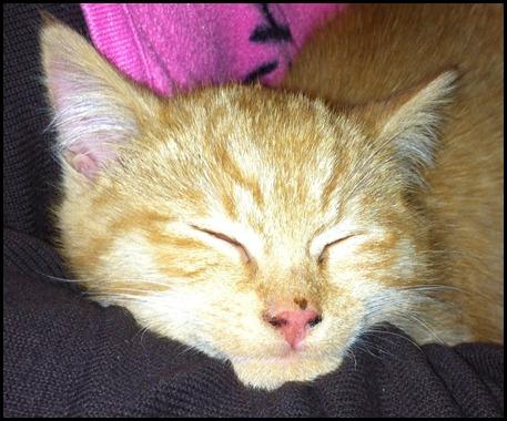 2011_12 Garfield (12)