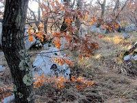 Hrastovi listi v prvih sončnih žarkih