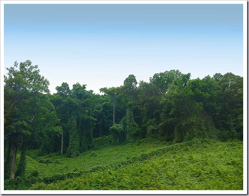 Kudzu-Sculpture-Route-75