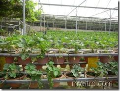 Green View Garden 6