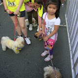 Pet Express Doggie Run 2012 Philippines. Jpg (113).JPG