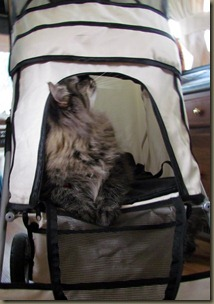 Baxter in his stroller  9 1/2 months old