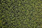 Tkanina obiciowa. Ognioodporna. 40,000 cykli. Zielona.