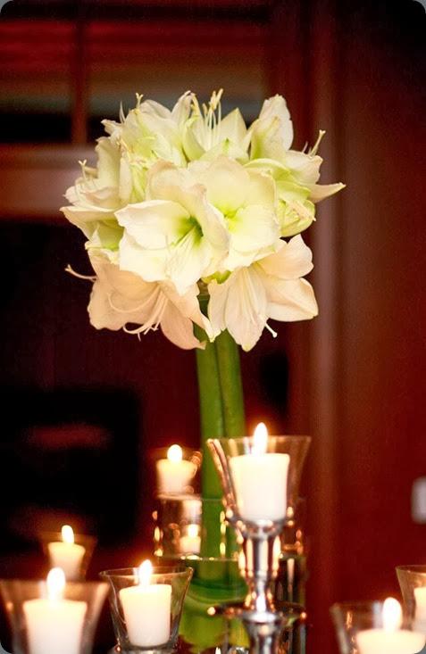 amaryllis  bouquetfleuriste.com 532003_501578623198690_306219552_n
