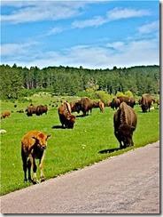 a - bison