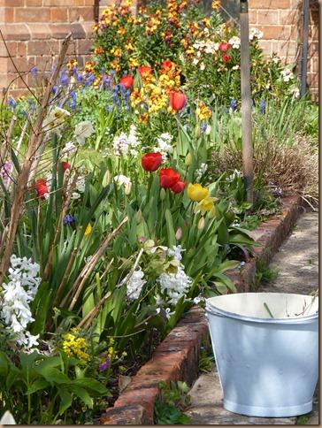 garden colours 004