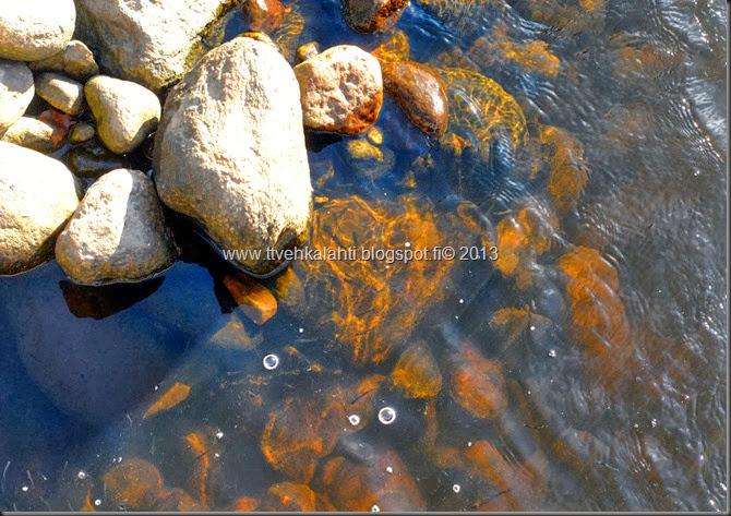 ruskaa ruohoja veden äärellä jääkiekko kaukalo muuttaa 028