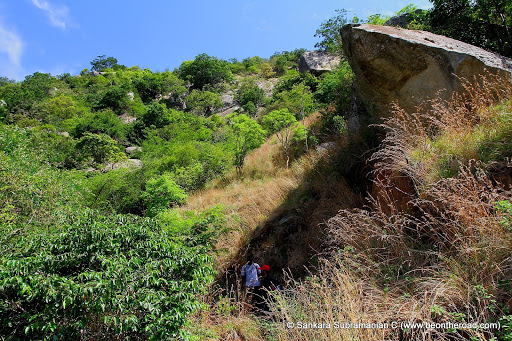 The trekking path full of thorns and large bushes