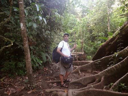 20. La drum, prin jungla Corcovado.JPG