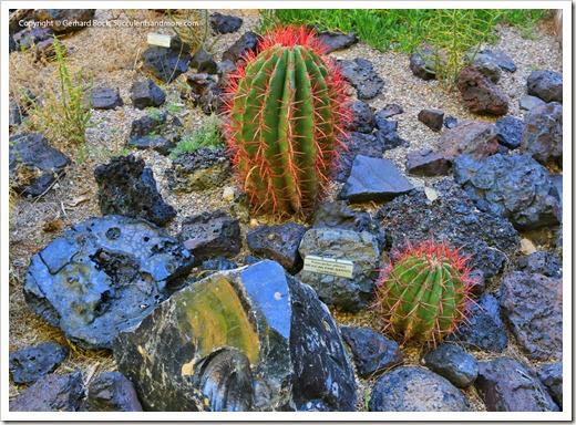 131203_TucsonBotanicalGarden_182
