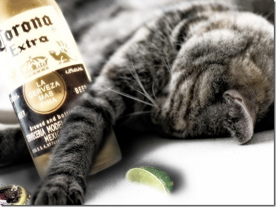 Funny_wallpapers_Drunk_Cat_025287_