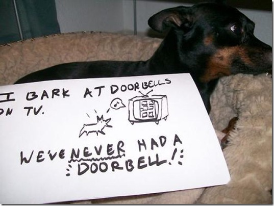 dog-shaming-bad-24