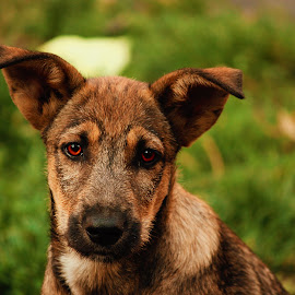 Puppy by Văduva Alexandru - Animals - Dogs Portraits ( adorable, puppy, cute, dog, portrait,  )