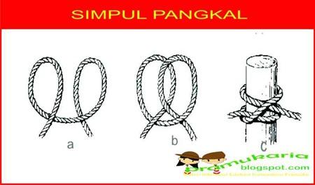 simpul-pangkal-2