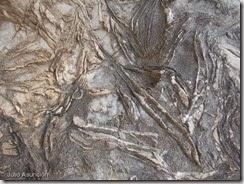 Sierra Helada - Fósiles