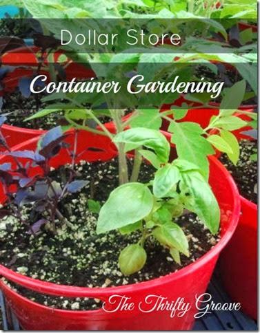 container garden1