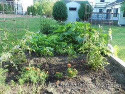 Garden - July 15, 2011