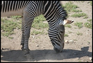 Zoo5 036