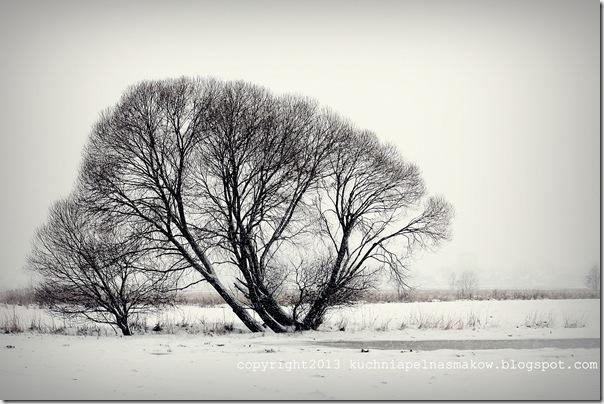 pola w zimowej szacie (1)