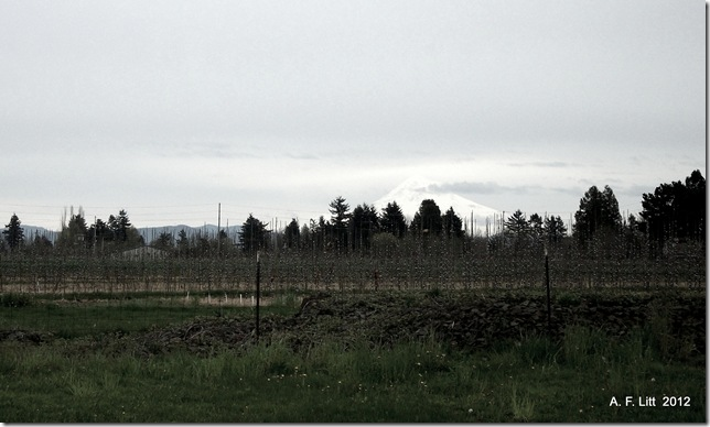Mt. Hood from Gresham, Oregon.  April 17, 2012.  Photo of the Day, April 18, 2012.