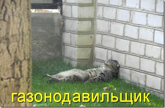 kotomatritsa_xp