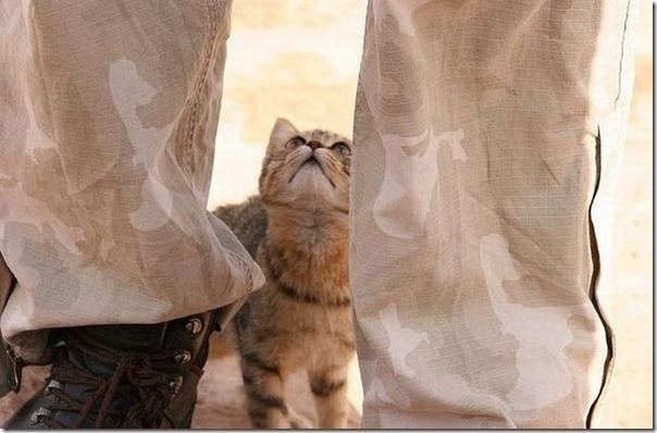 Soldados e animais de estimação (15)