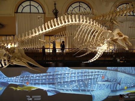 34. Schelet de balene.JPG